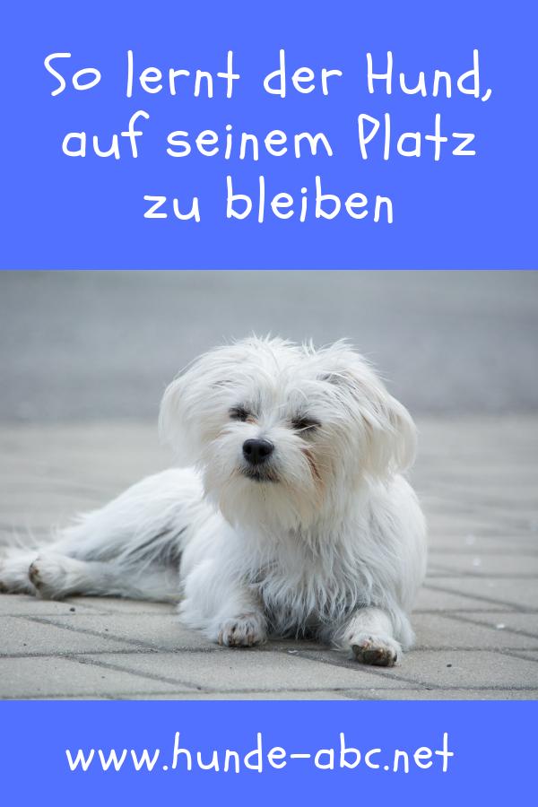 Eine Wichtige Lektion Der Ein Junger Hund Erlernen Muss Ist Es
