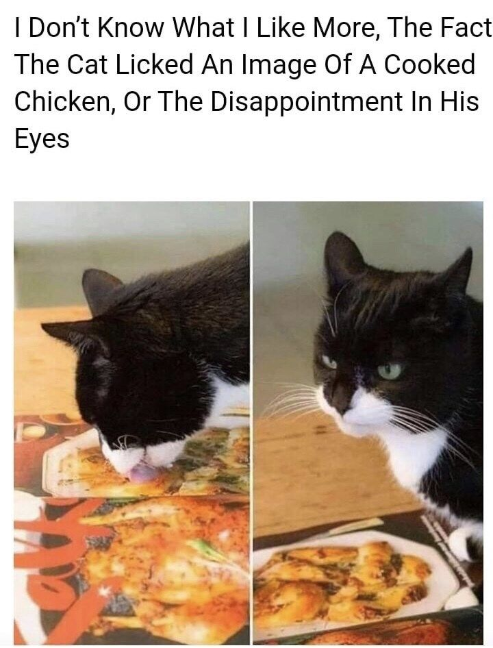 Prepare To Be Wooed By This Caturday Mood (33 Cat Memes)