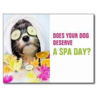 If your dog deserves a spa day bring them to
