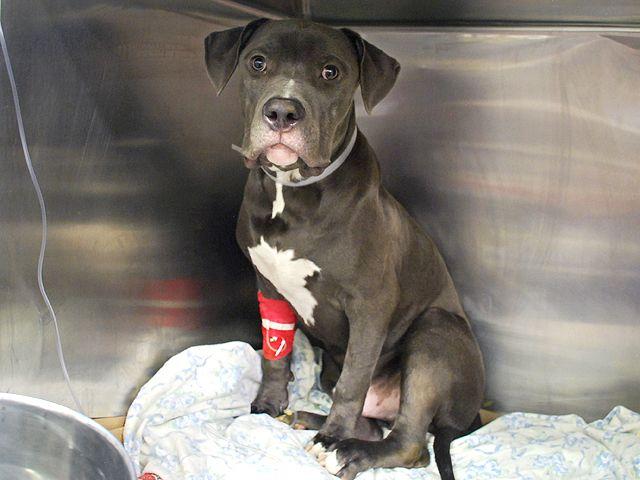 Bania A1045956 Emergency Vet Pets Pet Health