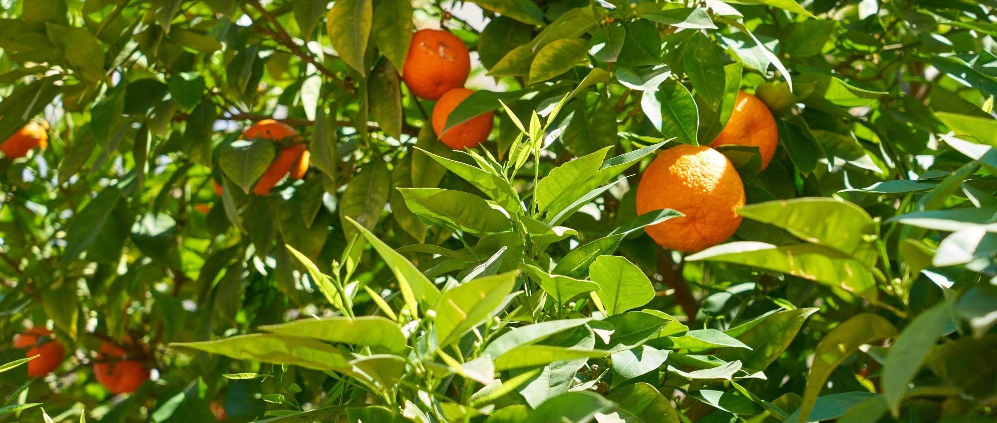Epingle Sur Jardin Productif Et Pratique
