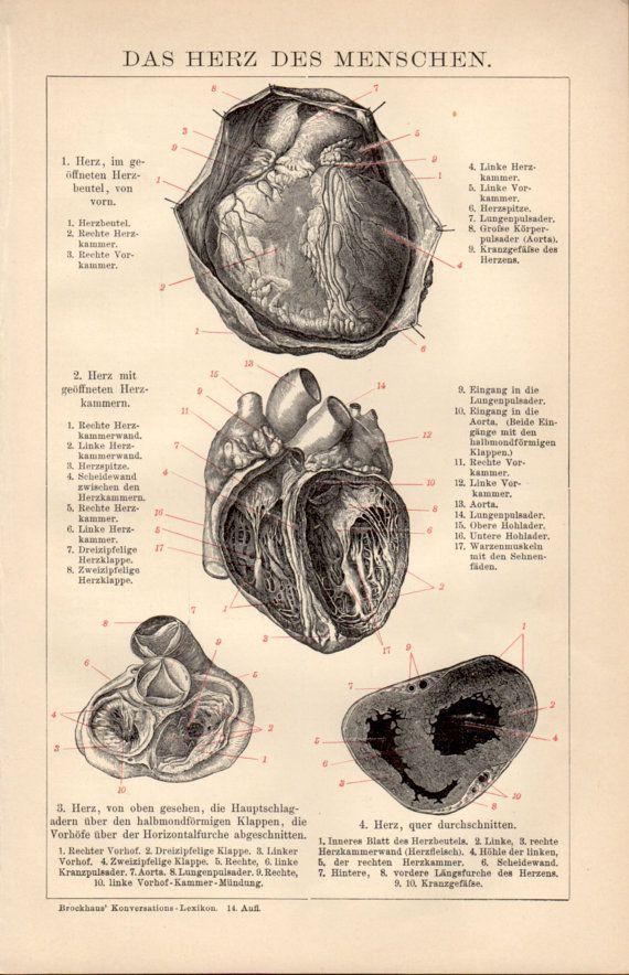 Old Lithograph Prints 1898 Heart Anatomy Antique Print Vintage