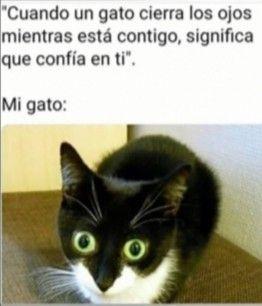 Pobre Gato Xd En 2020 Mascotas Memes Meme Gato Memes De Perros Chistosos