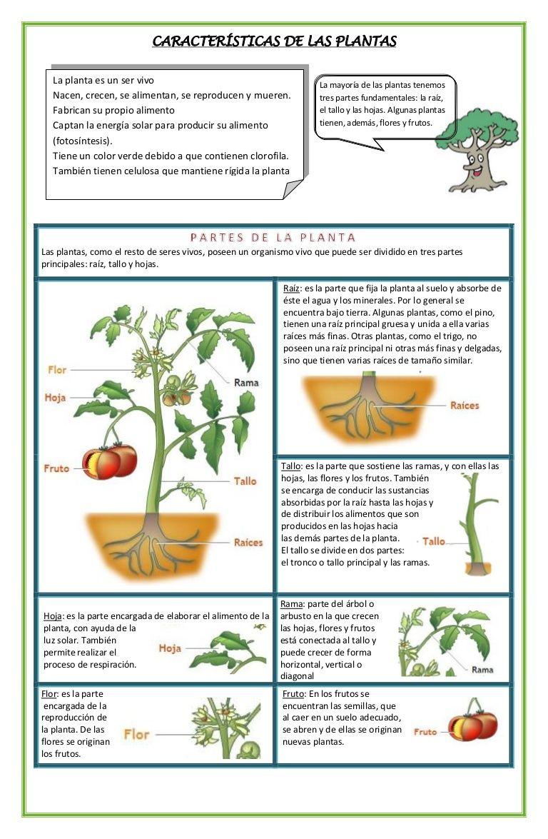 Imagen Relacionada Autotrofos Y Heterotrofos Caracteristicas De Las Plantas Acuaponia