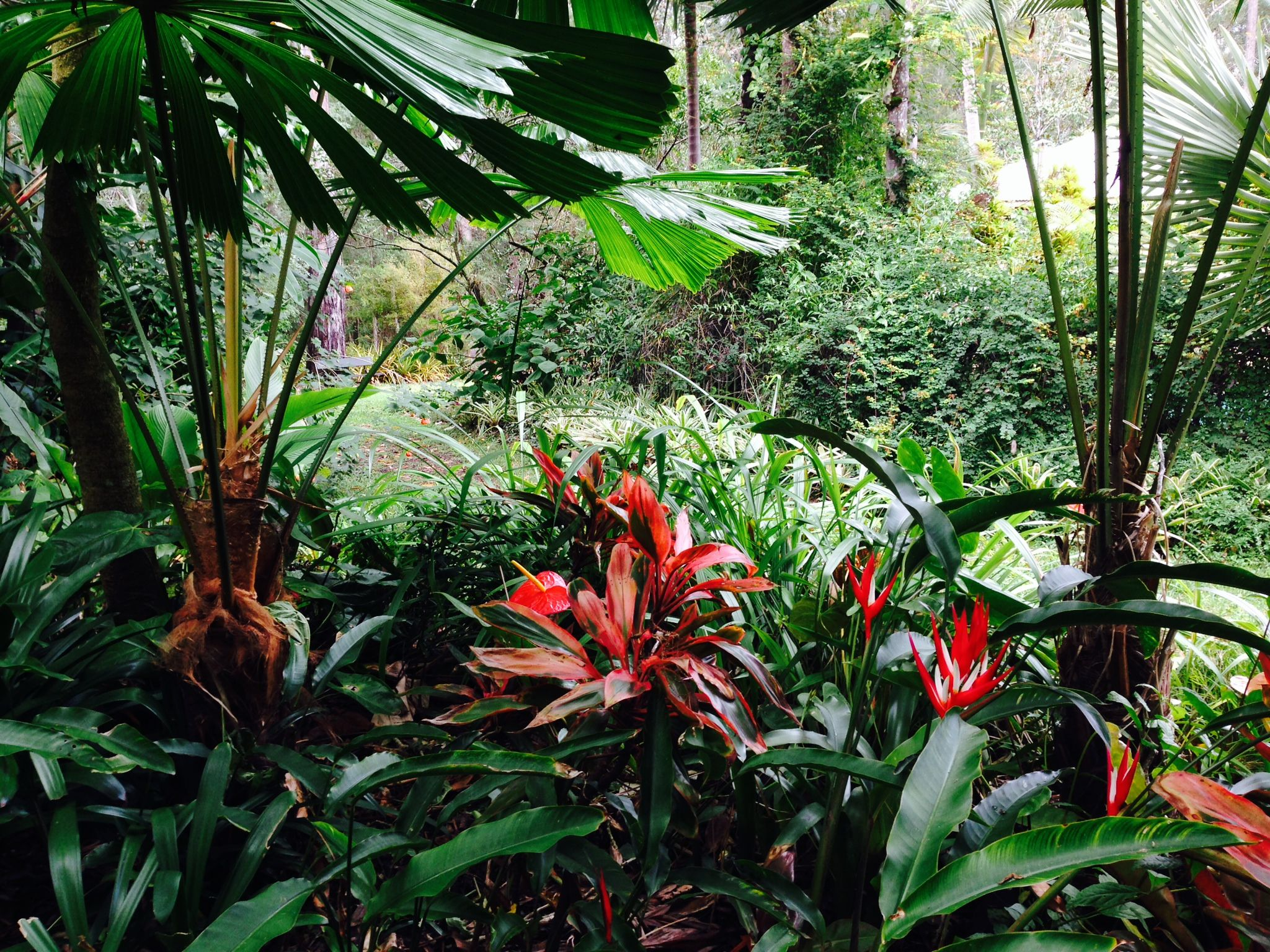 Plants For Subtropical Garden  Google Search
