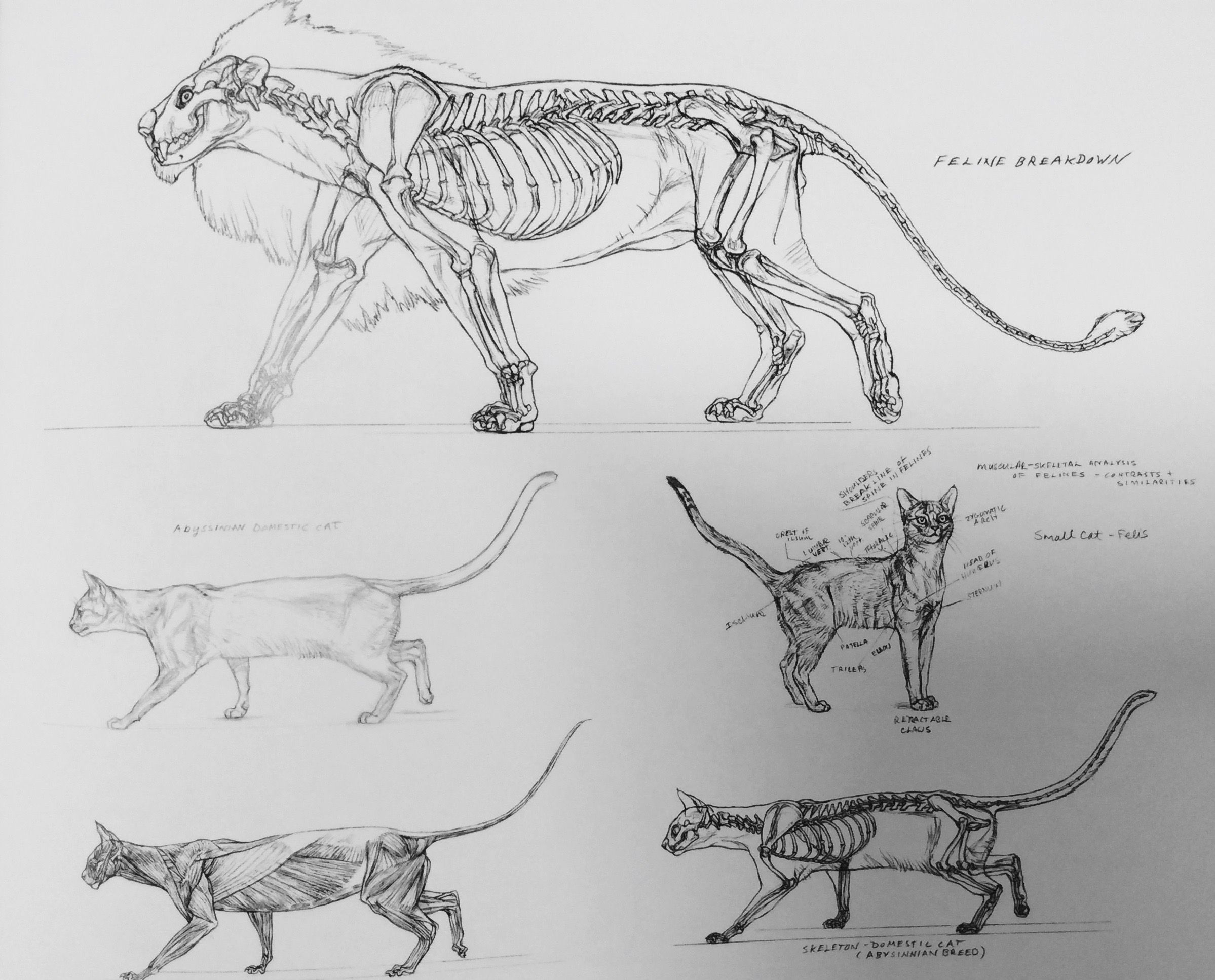 Pin By Marc Vervoort On Tekeningen Van Dieren Animal Drawings