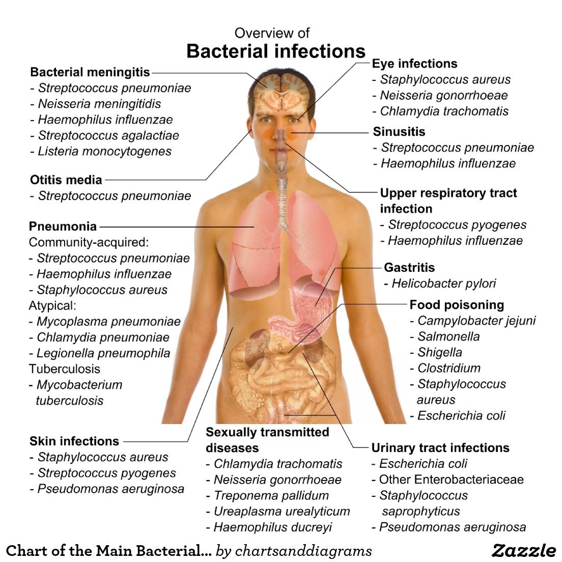 the causes and spread of infections Factors in the emergence of infectious diseases  table 1 summarizes the known causes for a number of infections that  infections, have spread.