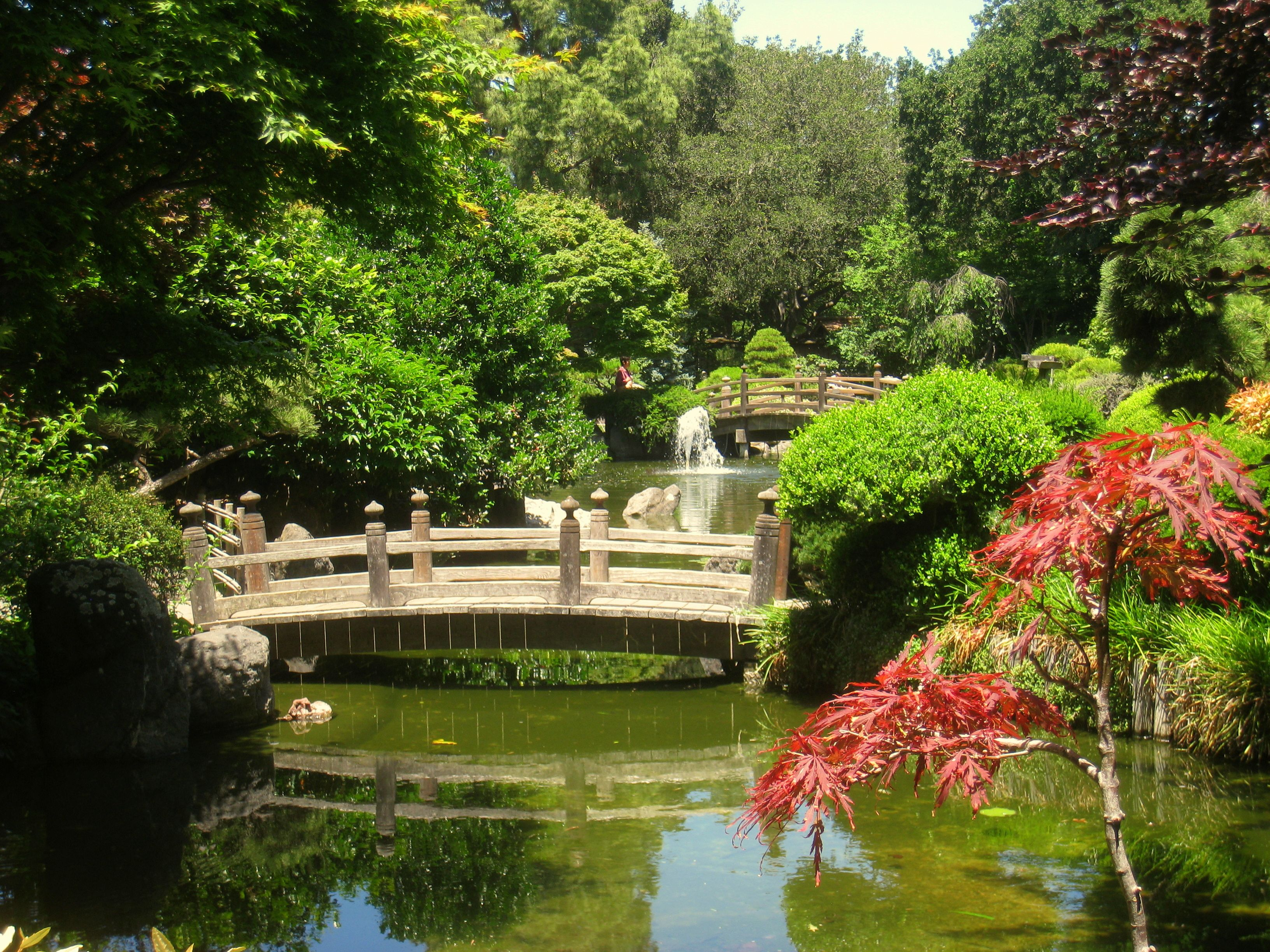 japanese garden san mateo - Google Search. Open daily in Central ...