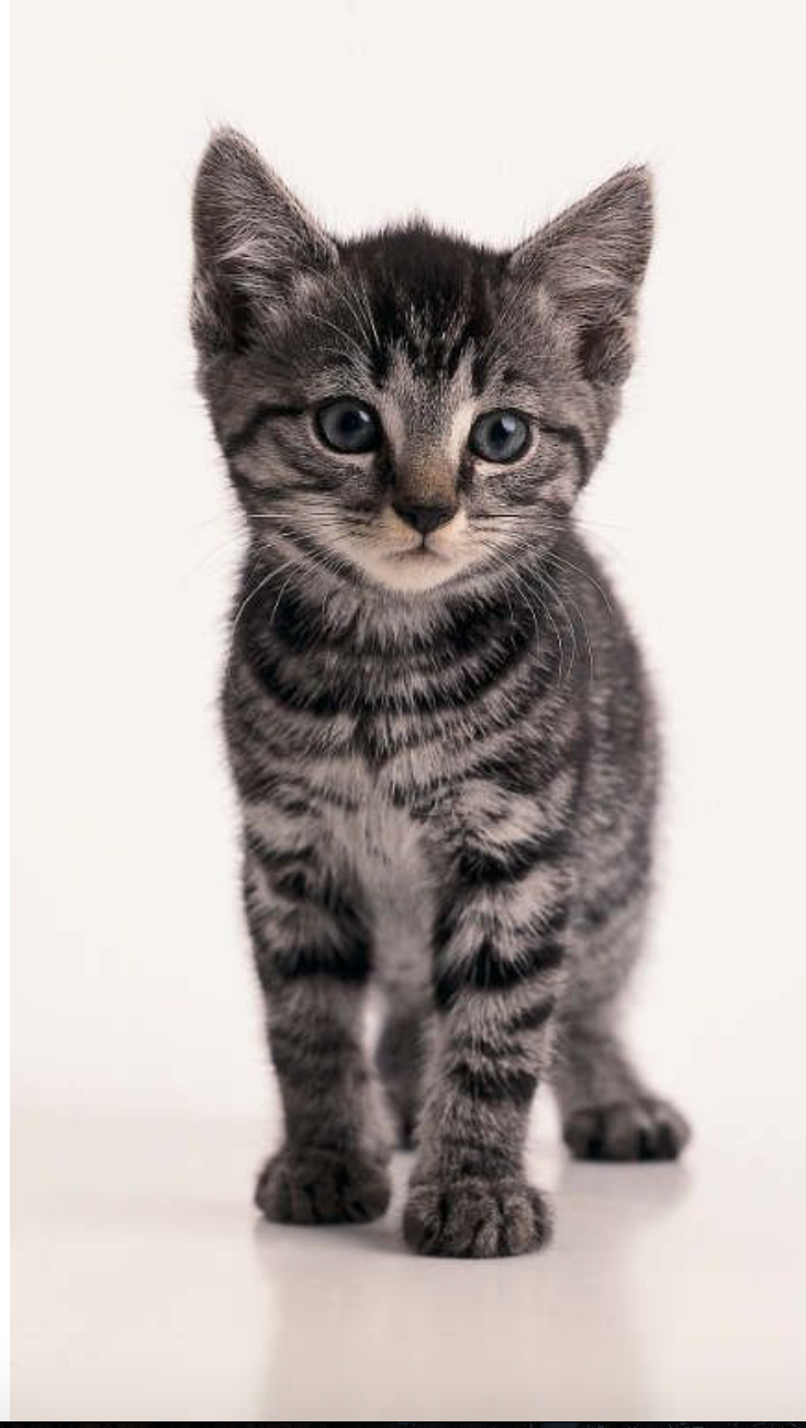 The Cutest Adorable And Gorgeous Kitten Named Pepper In 2020 Grey Tabby Cats Grey Tabby Kittens Tabby Cat