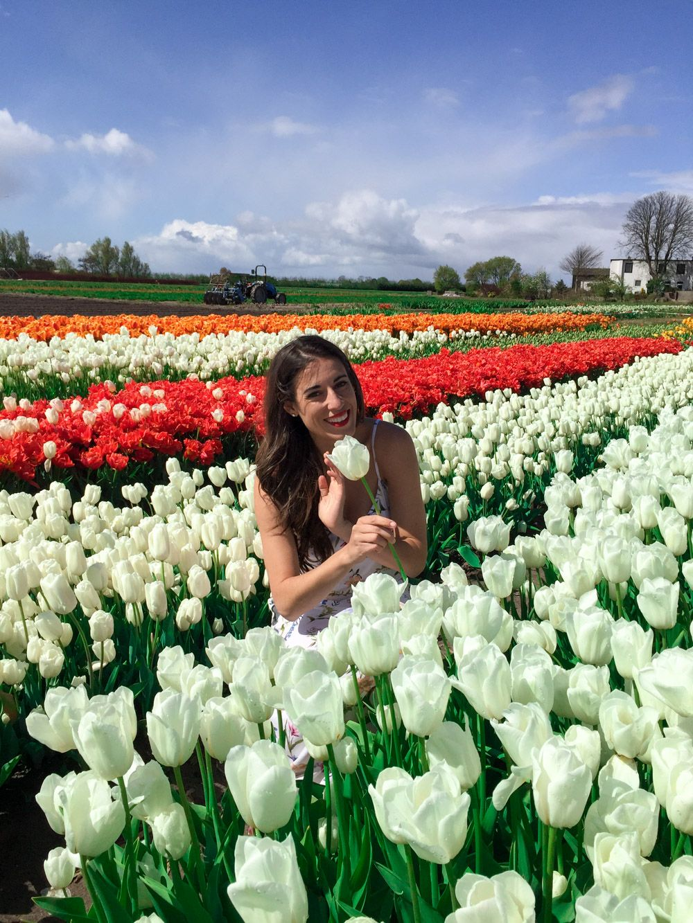 Seeing the tulips in Amsterdam How to