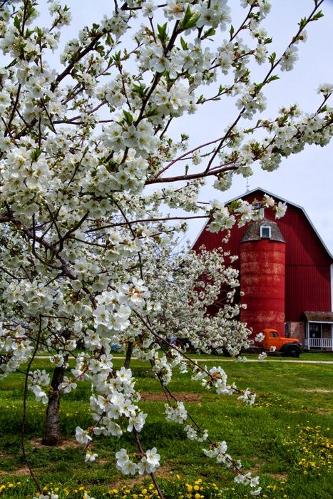Blossoms And The Barn By Sandy Kwas On Capture Door County The Barn At Laudenbach S Orchard And Winery Provi Door County Door County Cherries Door County Wi