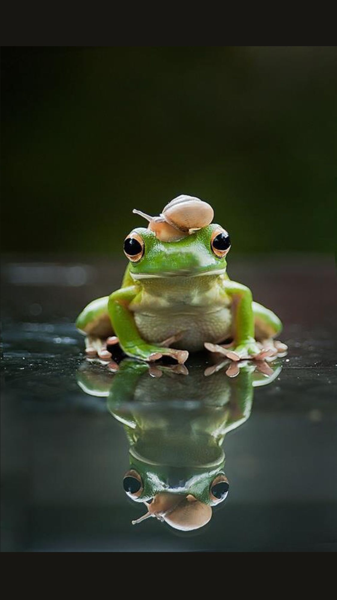Frog with a snail hat