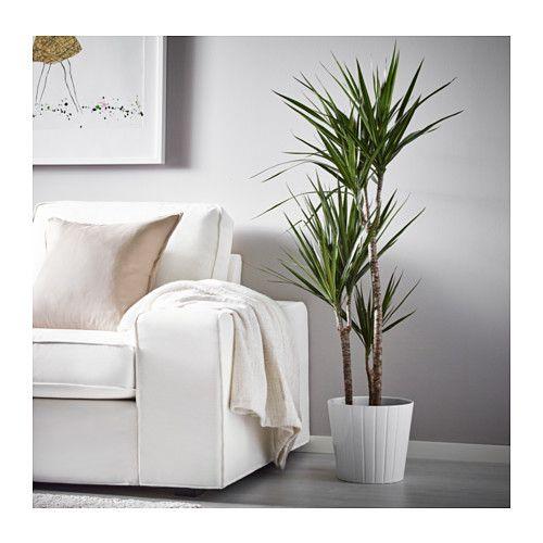 dracaena marginata plante en pot ikea salon. Black Bedroom Furniture Sets. Home Design Ideas