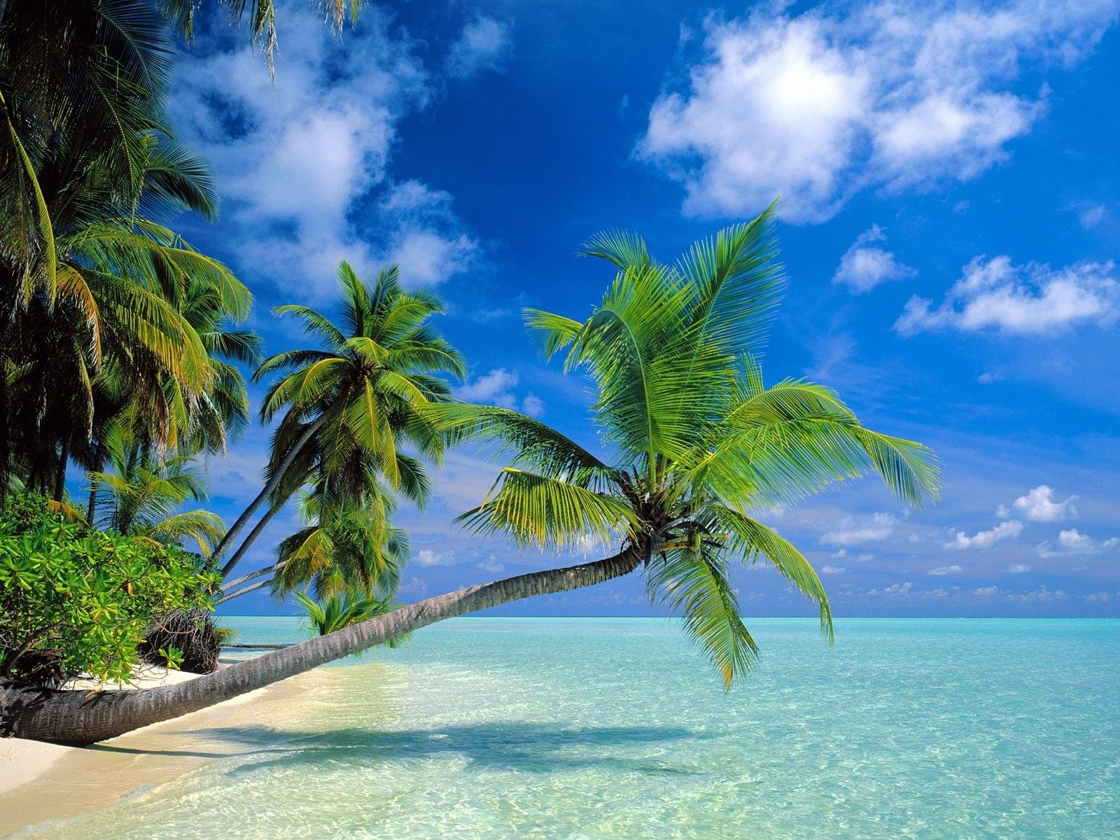 Palms Over Water Hawaii Beaches Beach Wallpaper Beautiful Beaches