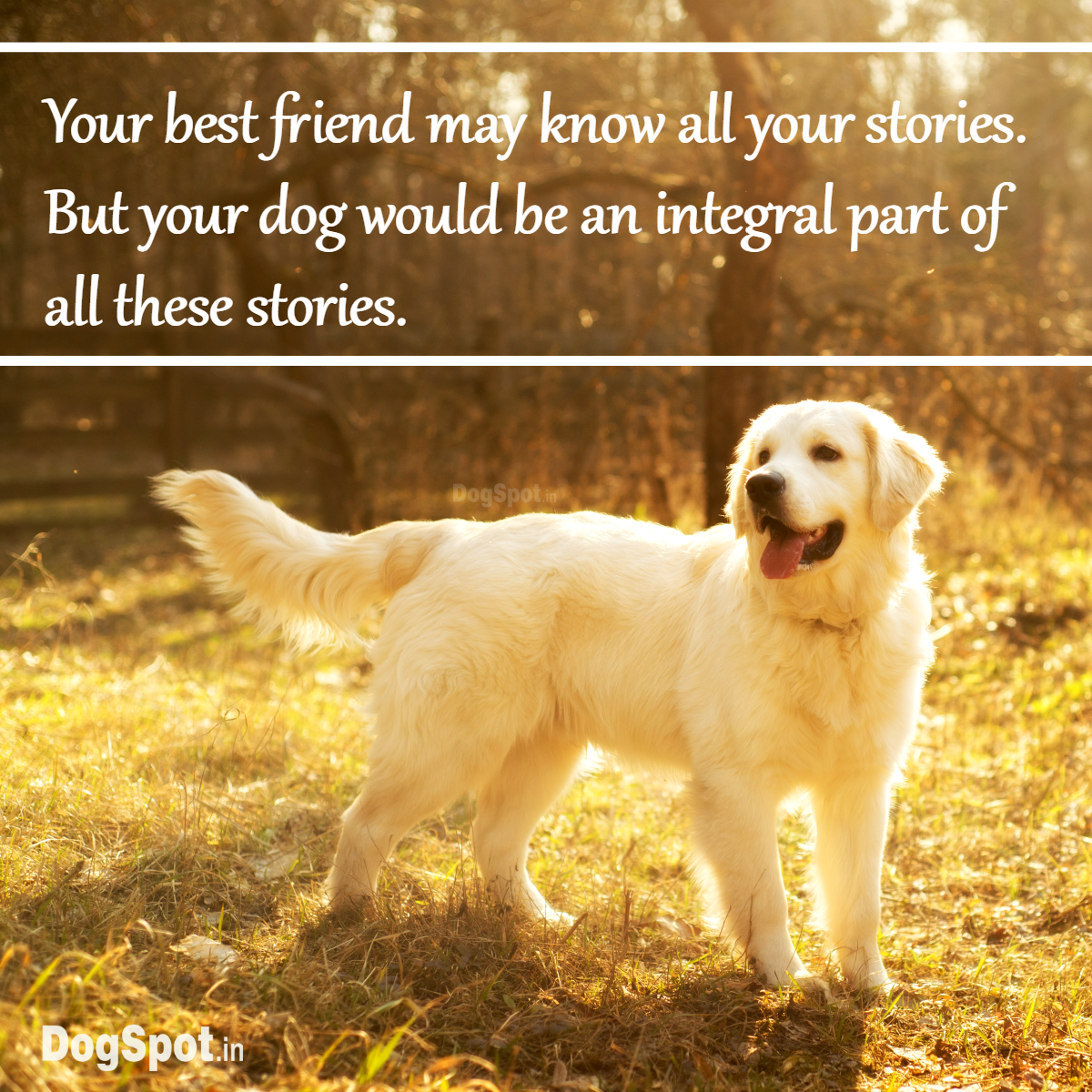 Dog Quote: Your best friend may know all your stories. But your