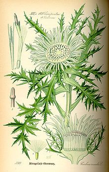 Pin By Marta On My Life In The Bush Of Ghosts Botanical Illustration Botanical Drawings Botanical Art