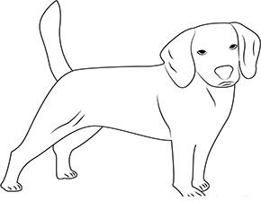 Bilder ausmalen hunde zum kostenlose Hund Ausmalbilder