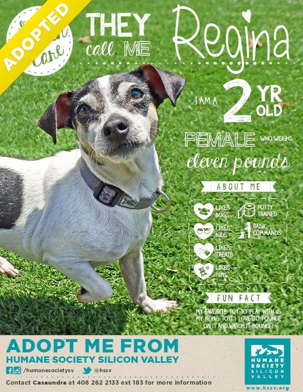 Regina Has Been Adopted Humane Society Shelter Dog Photography Chihuahua Mix