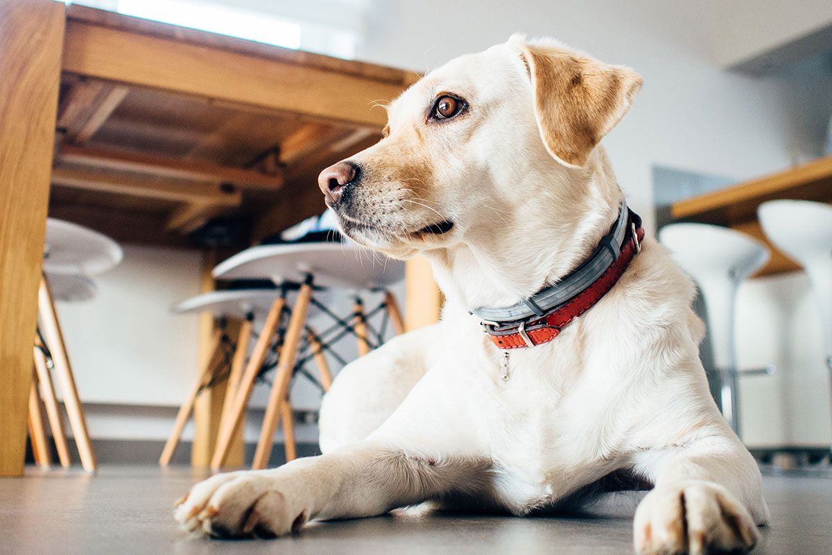 9 Hacks For The Ultimate Pet Friendly Apartment Steve Brown Apartments Training Your Dog Dog Training Obedience Dog Friends