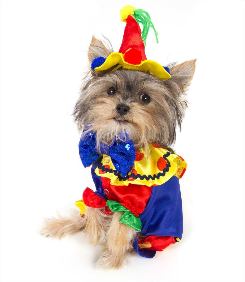 Brightly colored one piece Clown dog costume comes with a matching hat. Snaps closed at chest. Colorful and easy to fit.  sc 1 st  Pinterest & Brightly colored one piece Clown dog costume comes with a matching ...