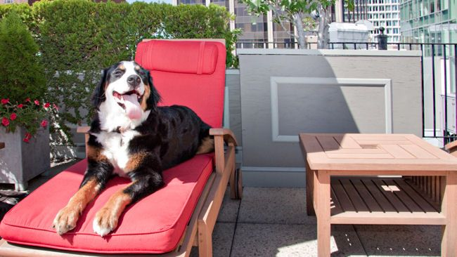 National Pet Month - Treat Your Best Friend to Some R&R