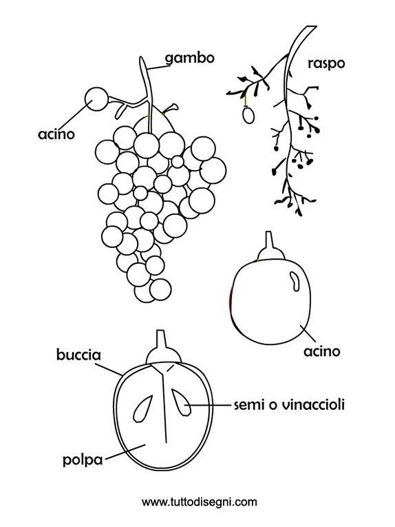 Ben noto UVA DA COLORARE | Scheda sull'uva da colorare e da stampare GM62