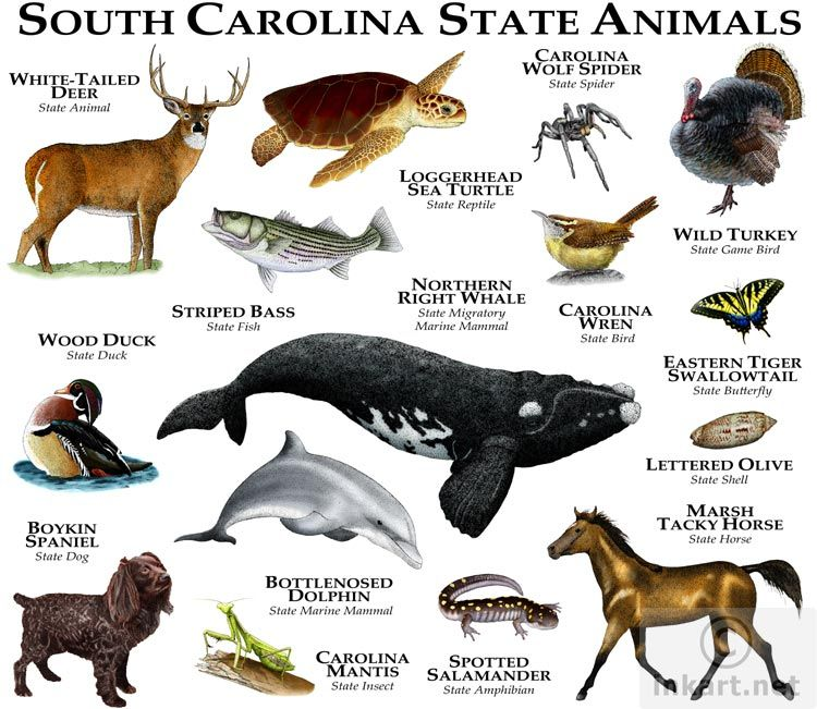 These Are The South Carolina State Animals They Vary From