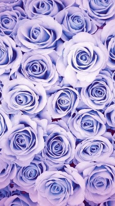 Pin By Lisa Borba On Screen Saver Flower Background Wallpaper Flower Wallpaper Purple Wallpaper