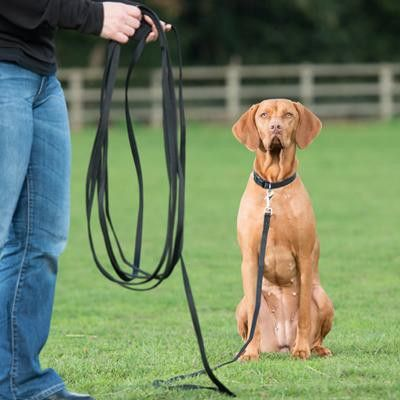 Clix Long Line Dog Harness Your Dog Dog Leash