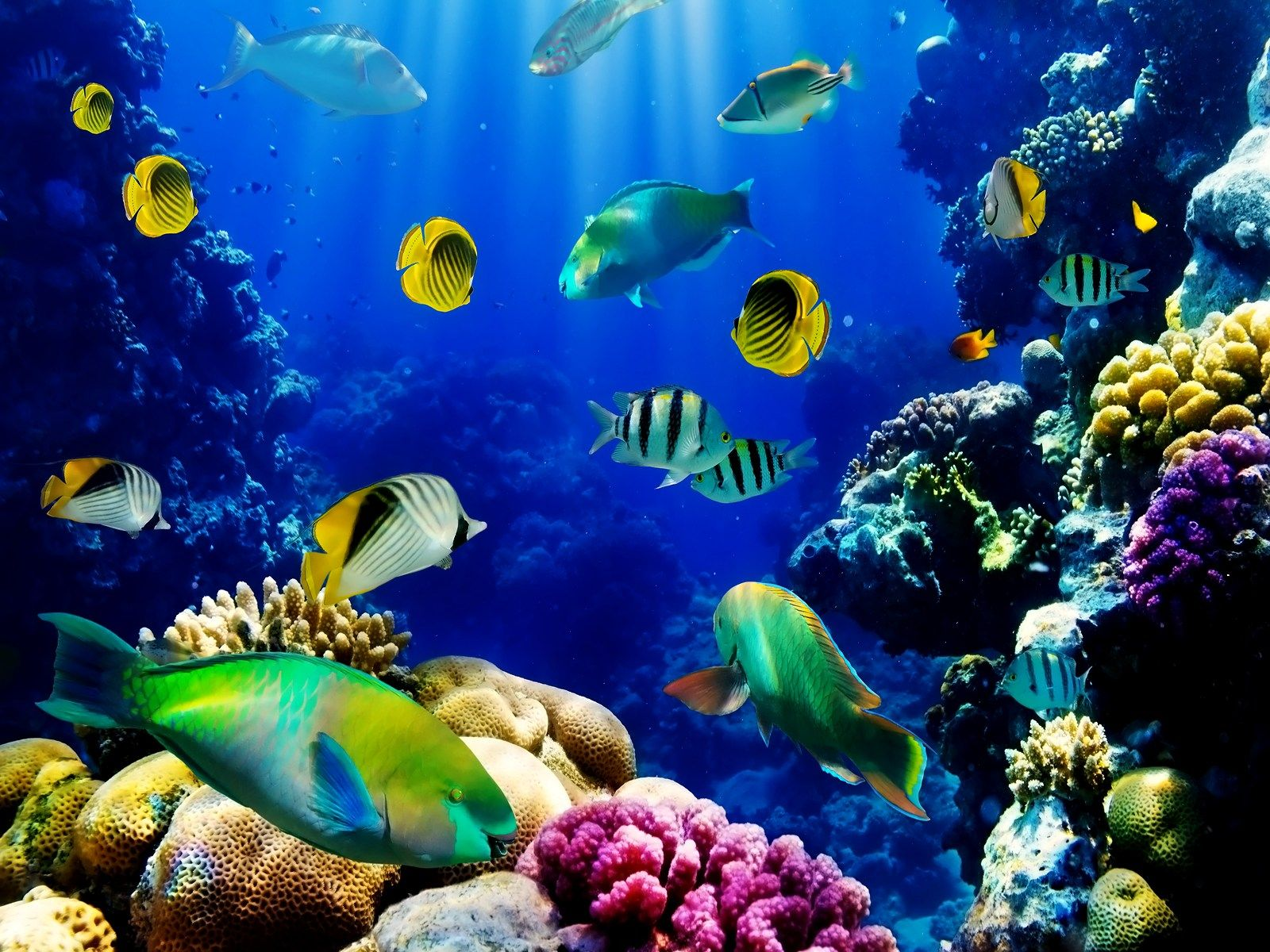 3d Aquarium Wallpaper