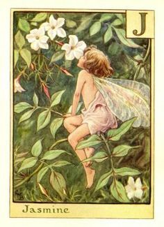 Jasmine Fairy By Cicely Mary Barker In 2020 Flower Fairies Cicely Mary Barker Spring Flower Art