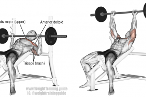 Best Chest Exercises For Lower And Upper Chest Page 2 Of 5 Weight Training Guide Chest Workouts Best Chest Workout Bench Press