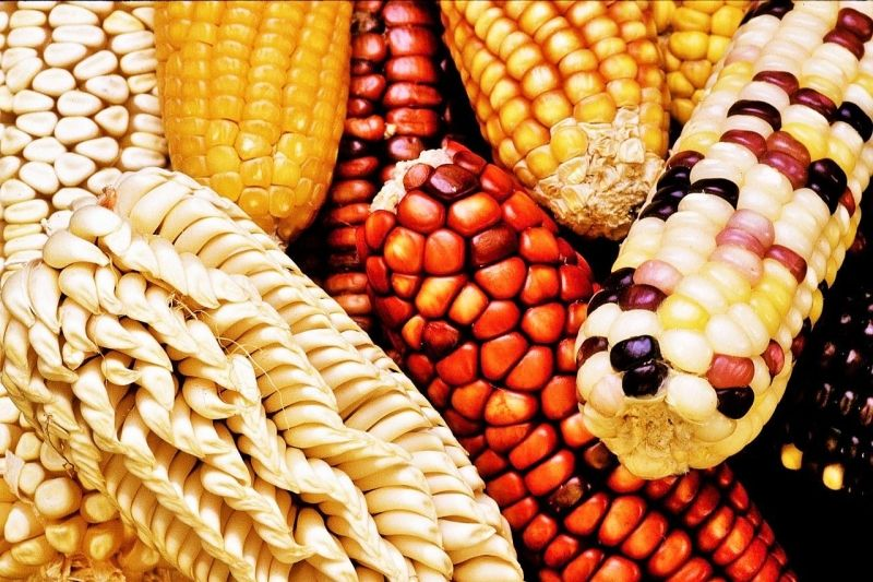 Corn benefits in 2020 | Food, Sustainable food systems ...