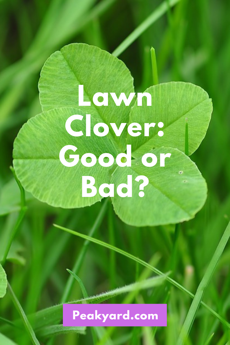 Is Clover In The Lawn Good Or Bad Peak Yard Clover Lawn Lawn Clover Plant