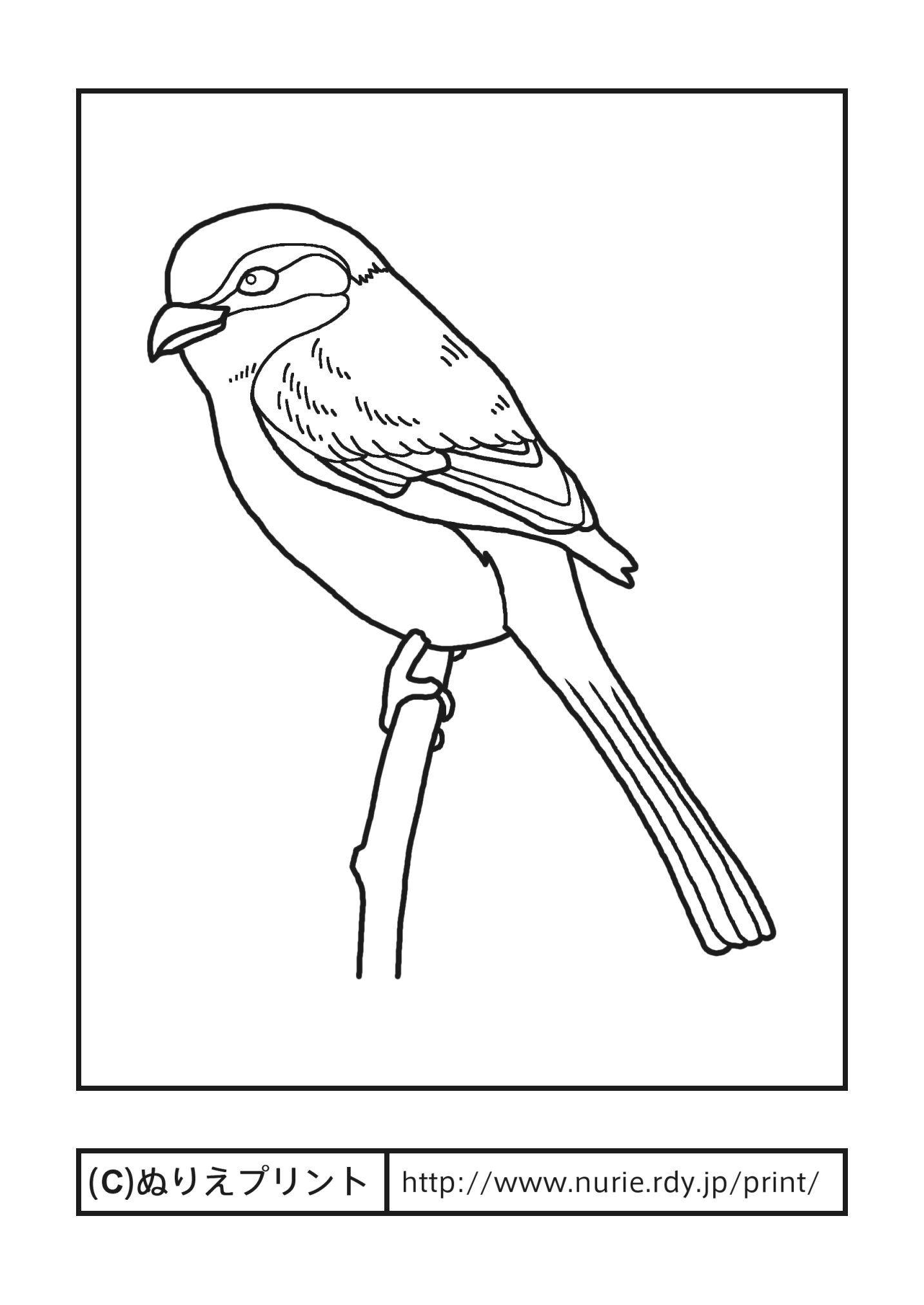モズ百舌主線黒大阪府の鳥無料塗り絵都道府県ぬりえプリント