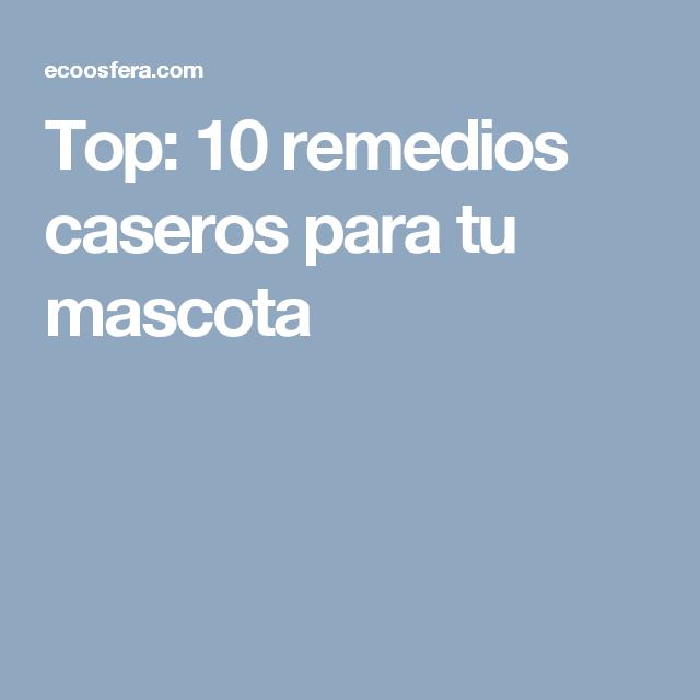 Top: 10 remedios caseros para tu mascota