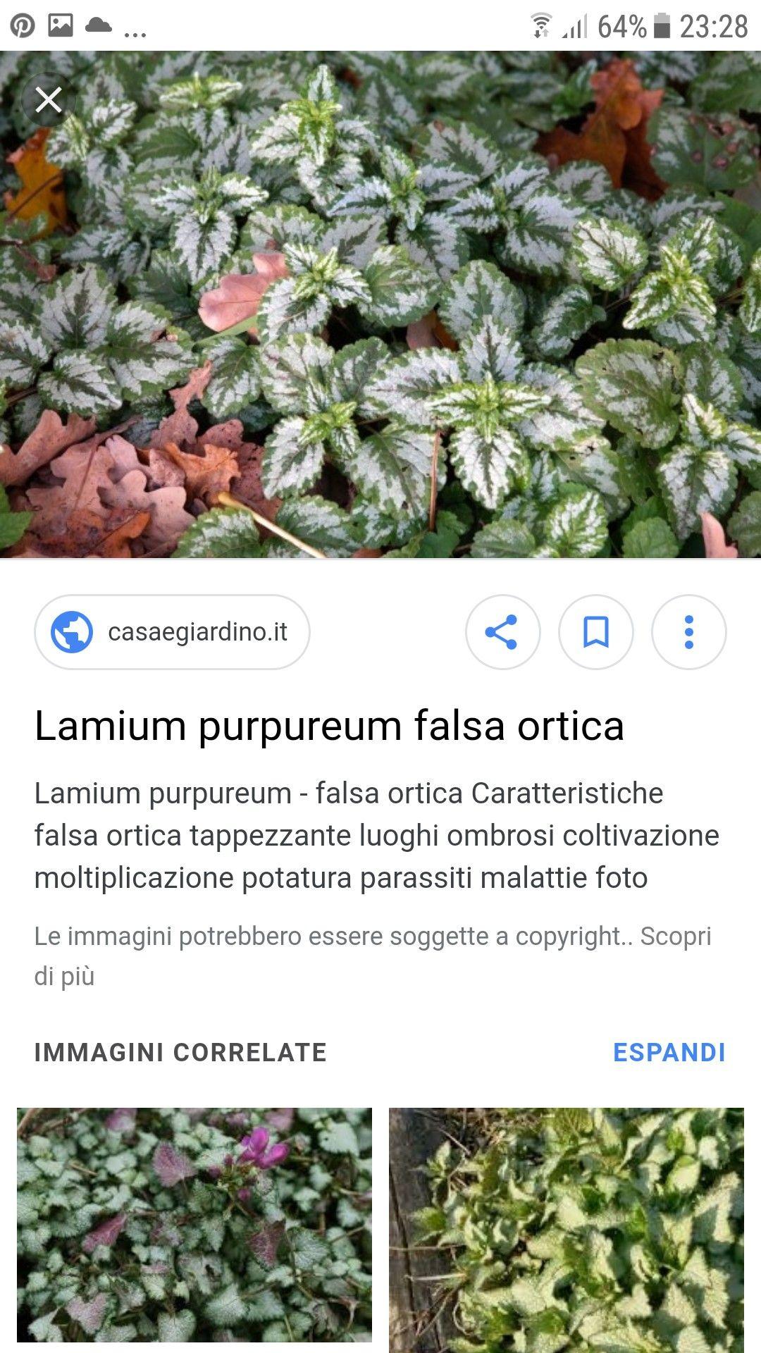 Piante Da Giardino Ombroso pin di marcello su emanuela recchi | coltivare, ortica, foto