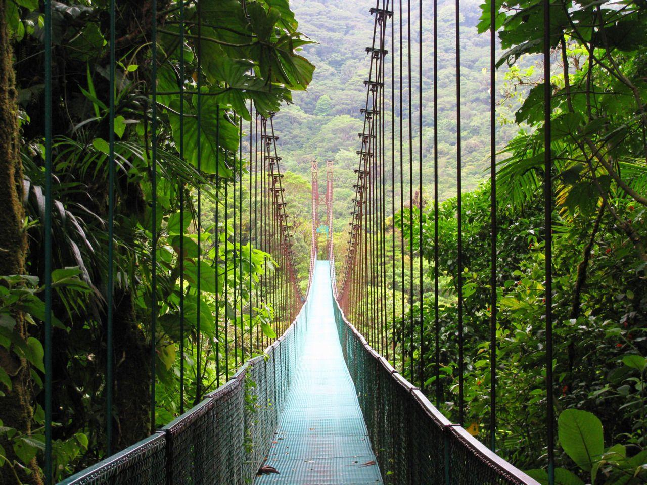 Costa Rica,Central America,Rainforest,Jungle