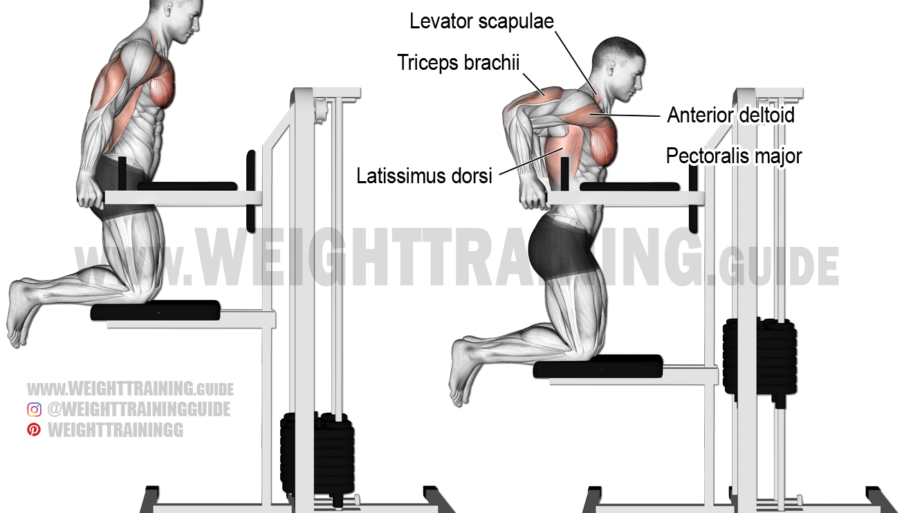 Machine-assisted triceps dip exercise instructions and video
