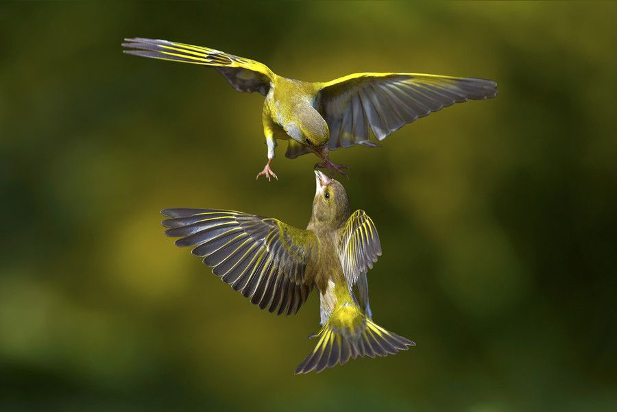 Flying Attack By Marco Redaelli On 500px Birds Flying Birds Beautiful Macro Photography