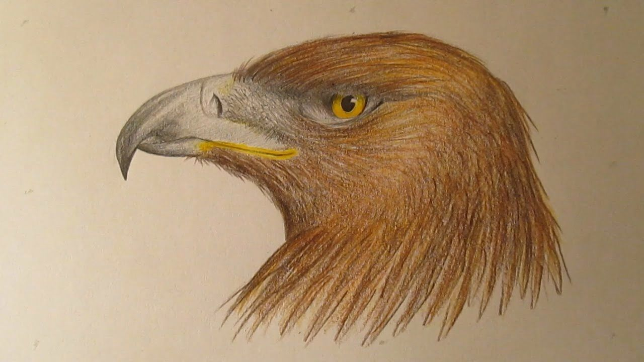 Cómo Dibujar Un águila Con Lápices De Colores, Dibujos