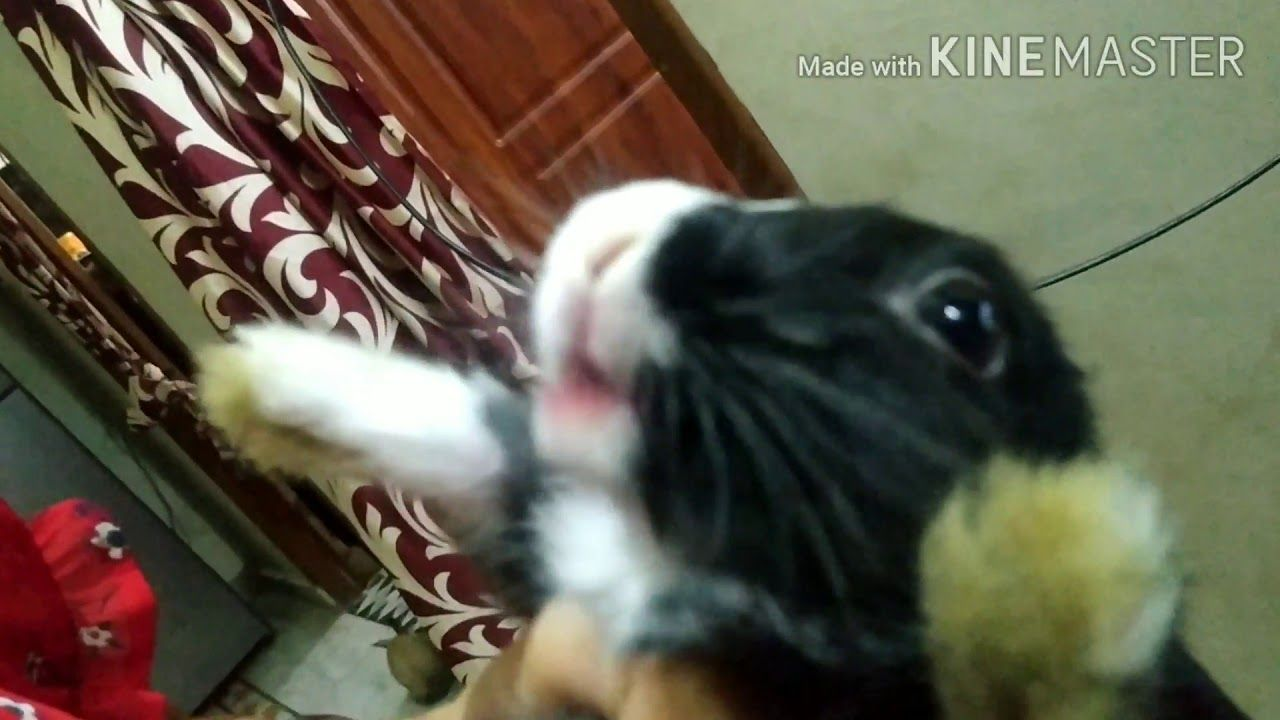 Pin By Rabbitvideos On Bunny Rabbit In 2020 Rabbit Eating Rabbit Cute Bunny