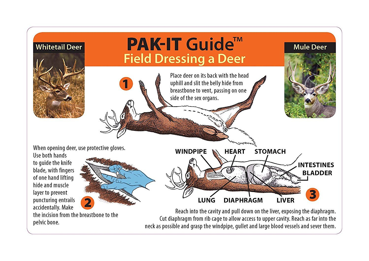 Pakit guide to field dressing a deer