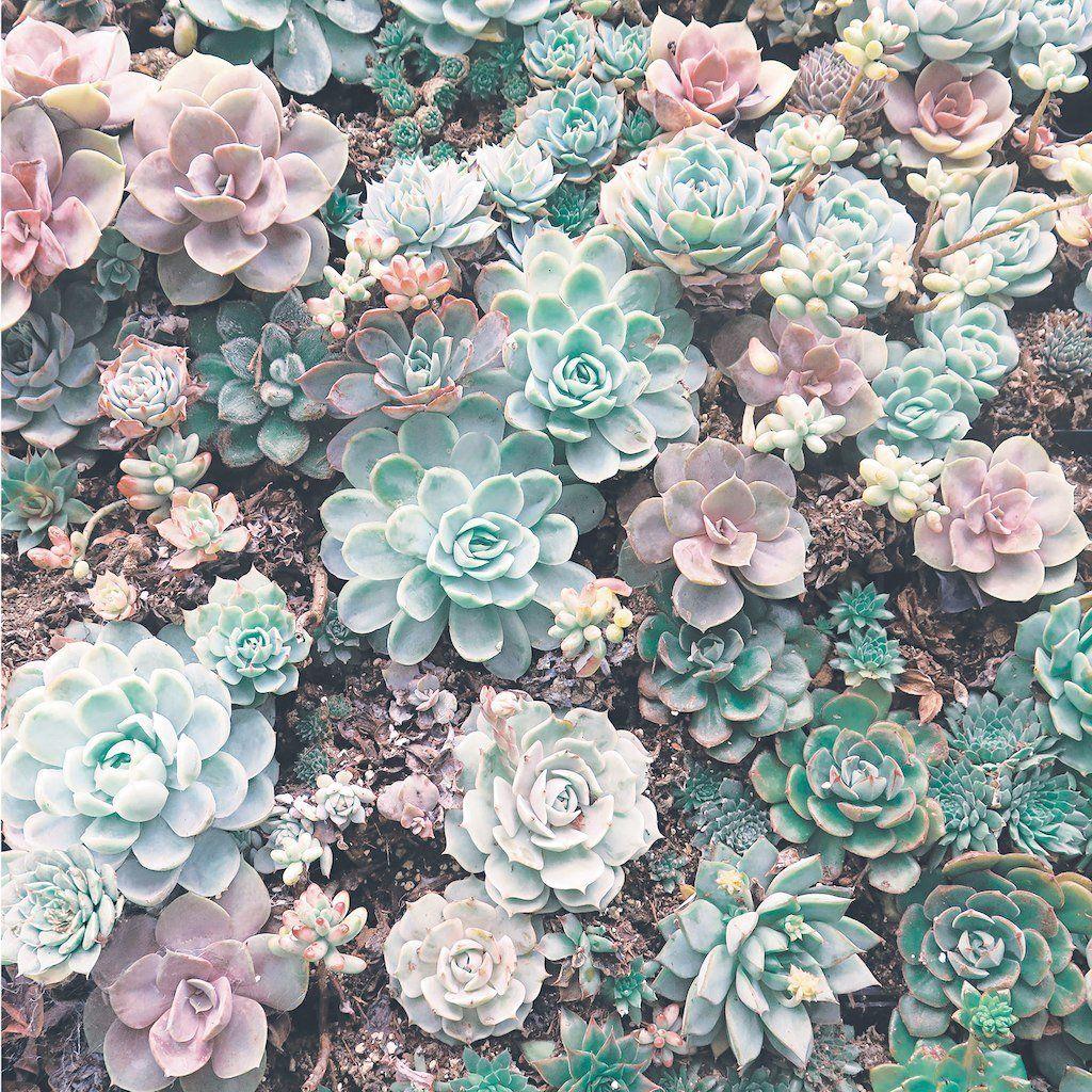 Pin by Plantzzy on Lock screen wallpaper Succulents