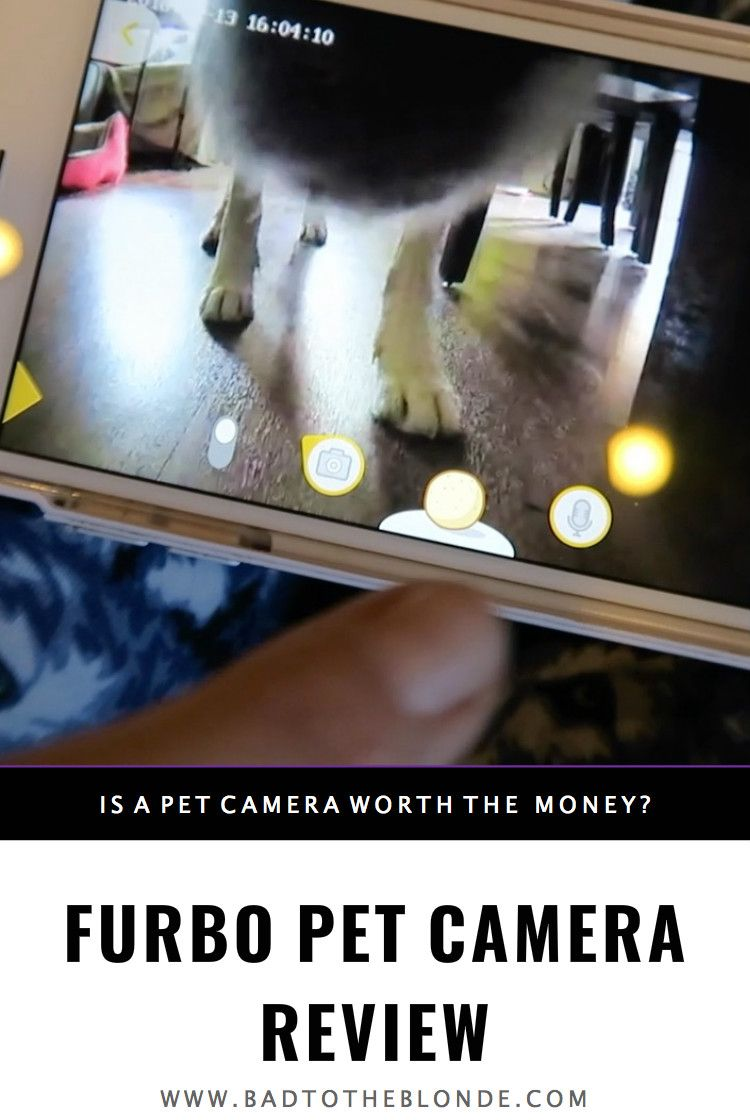 The Furbo Pet Camera Is The Best Pet Camera And No Training Is Required Pet Camera Pets Camera