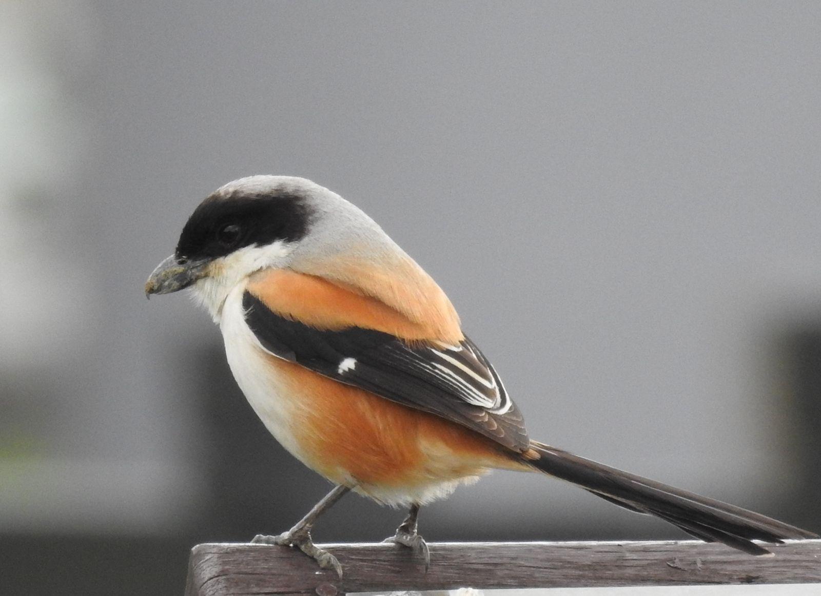 Pin by 曼玲 葉 on 土壤 Animals, Birds