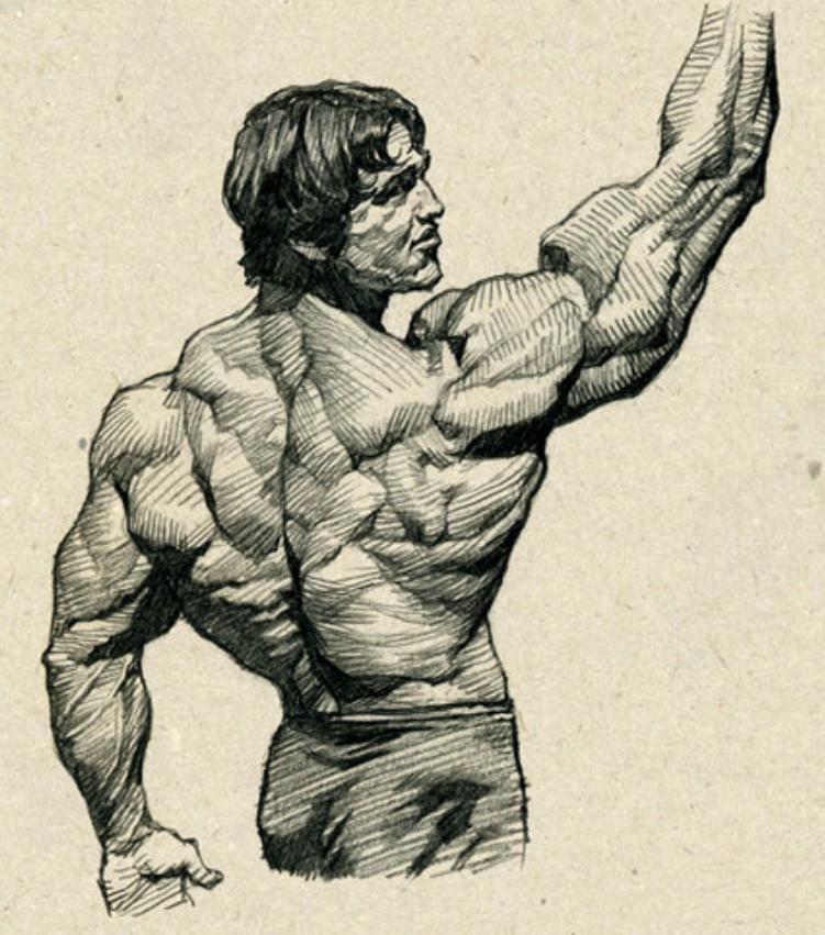 Arnold Human Anatomy Art Anatomy Sketches Gym Art