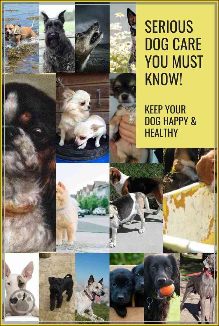 Stop The Headaches Learn More About Dog Care Dog Care Dog Training Near Me Dog Clinic