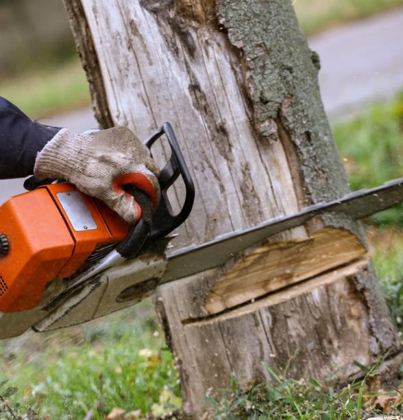 abattre un arbre chez soi la proc dure suivre a. Black Bedroom Furniture Sets. Home Design Ideas