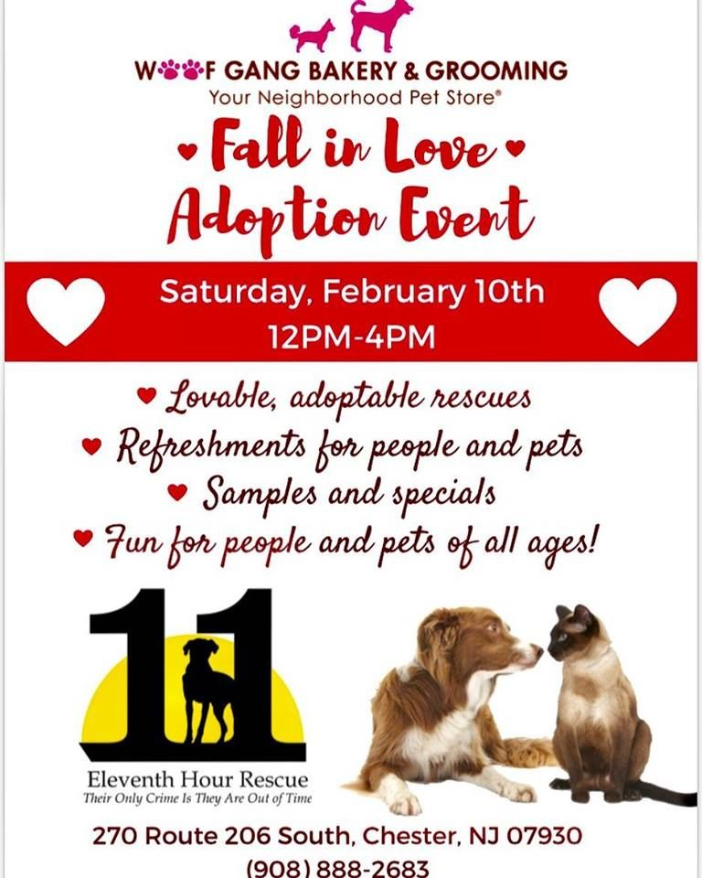 You Just May Fall In Love At Our In Store Adoption Event Featuring 11th Hour Rescue Pups We Are Donating A Portion Of O Falling In Love Supportive Lovable